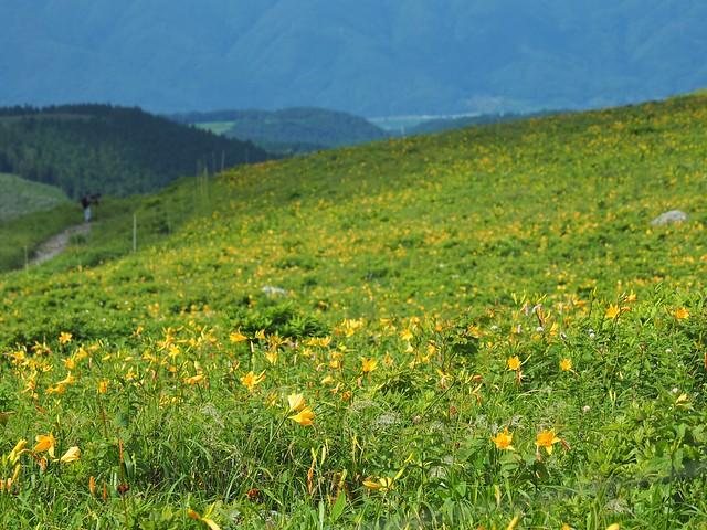 霧ヶ峰 200719 (19)