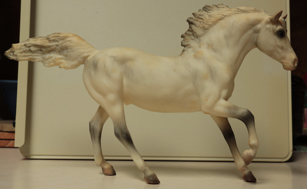 5M2A3032c Andalusian Stallion Right