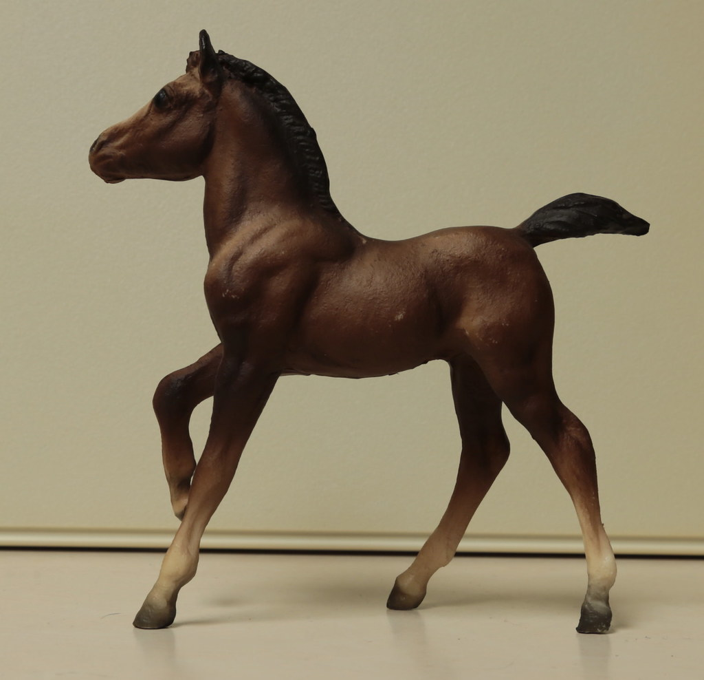5M2A3041c Andalusian Foal Left