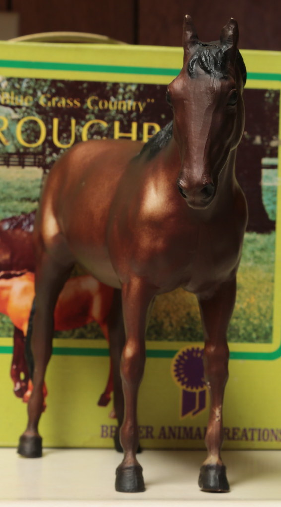 5M2A3049c Thoroughbred Mare Front