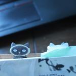 book + kittens