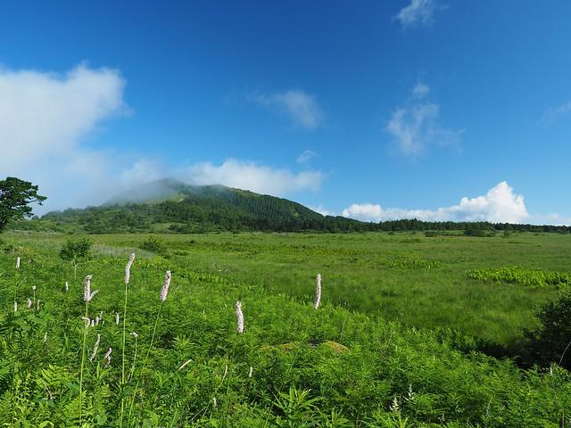 霧ヶ峰 200719 (4)