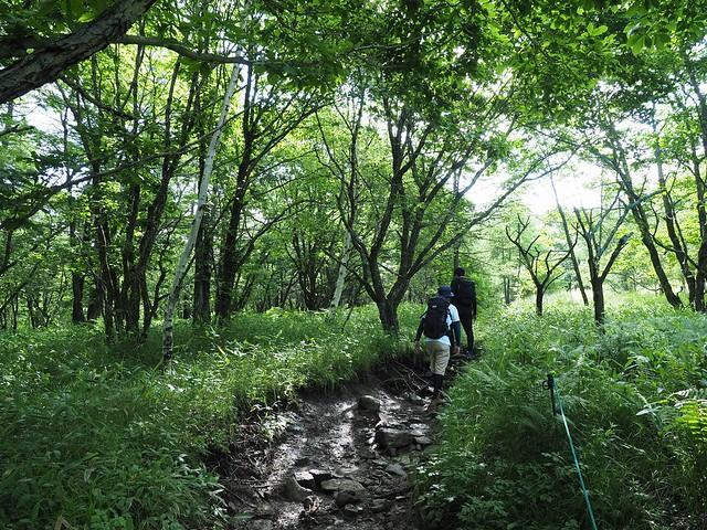 霧ヶ峰 200719 (11)