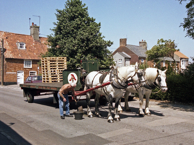 Adnam's Dray, Southwold, July 1989 (2)