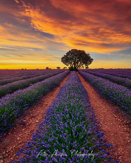 Lavanda Sunset | by Aitor Abadia Photography - Fotoneoo