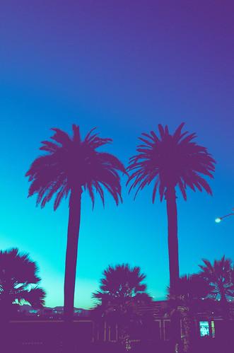 lasvegas vegas palmtree sunset tree aqua blue edit purple splittone stylized