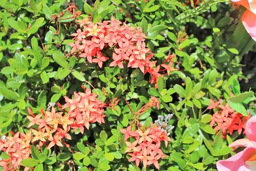 world trip travel asia flickr tour philippines explore rizal luzon baras flowers leaves