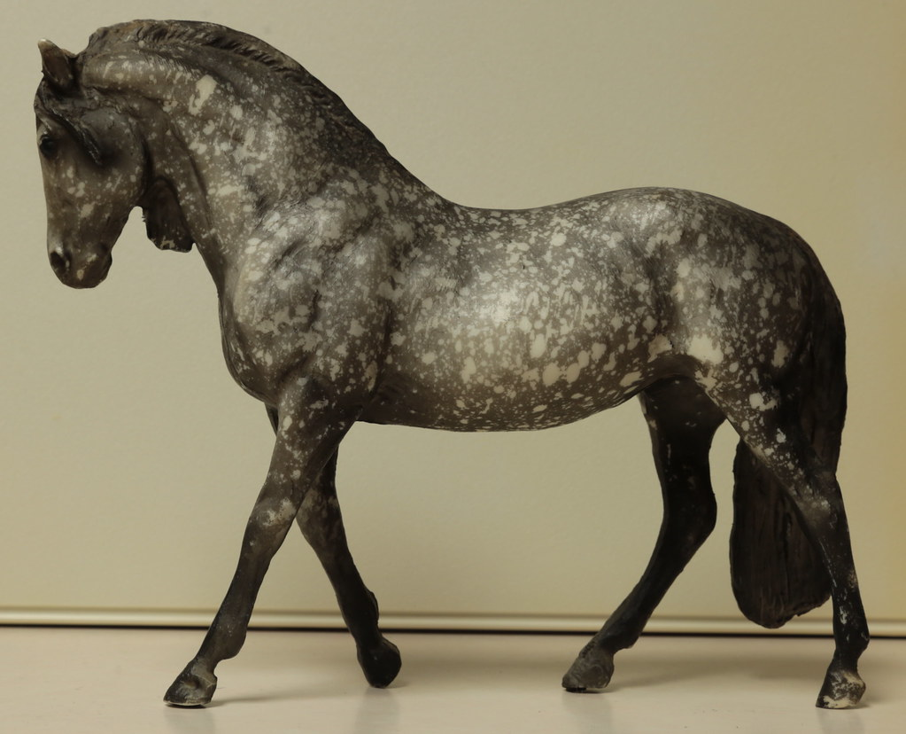 5M2A3039c Andalusian Mare Left