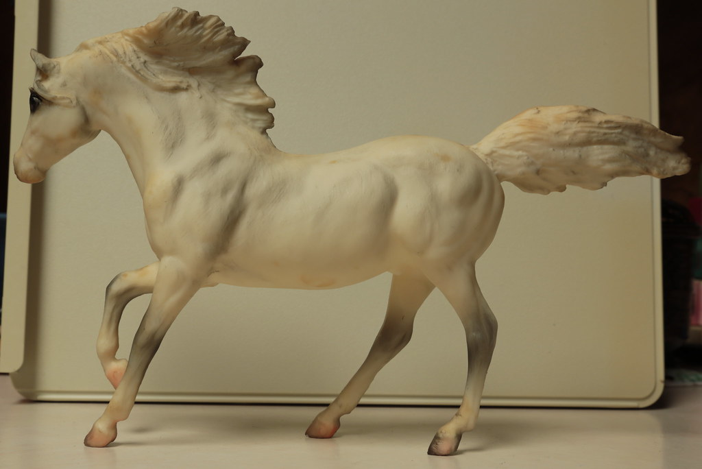 5M2A3033c Andalusian Stallion Left
