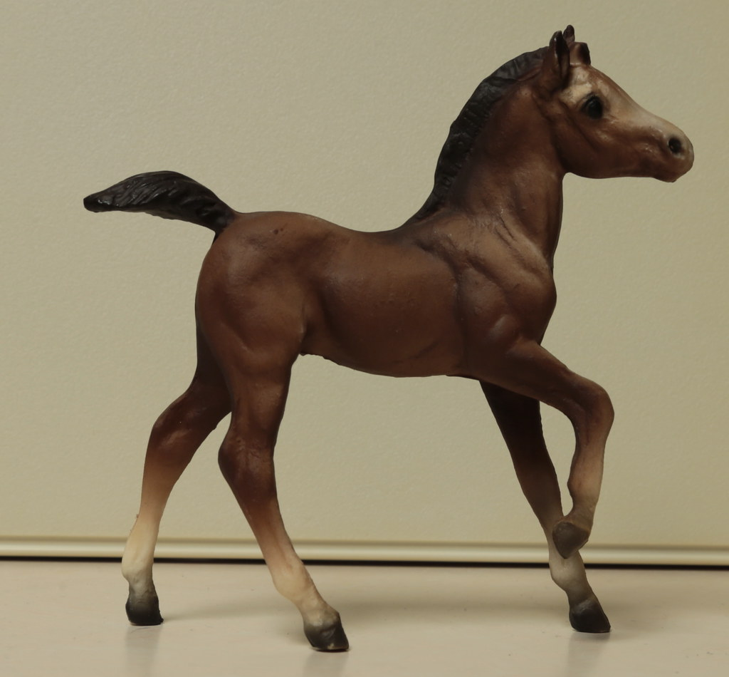 5M2A3040c Andalusian Foal Right
