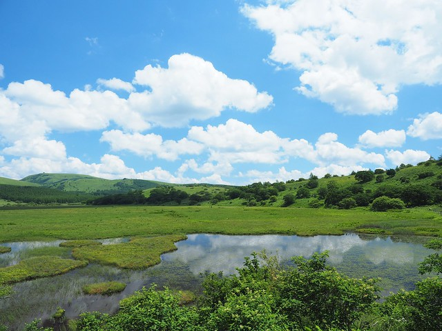 霧ヶ峰 200719 (58)
