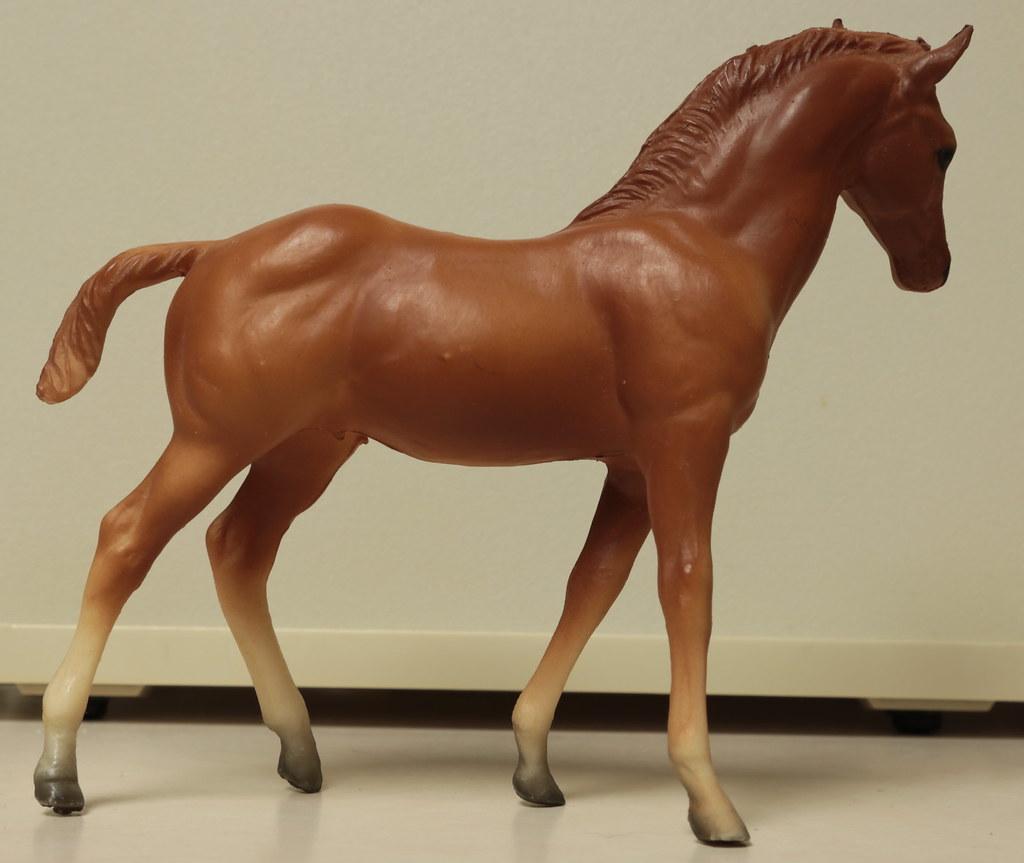 5M2A3028c Quarterhorse Foal Right