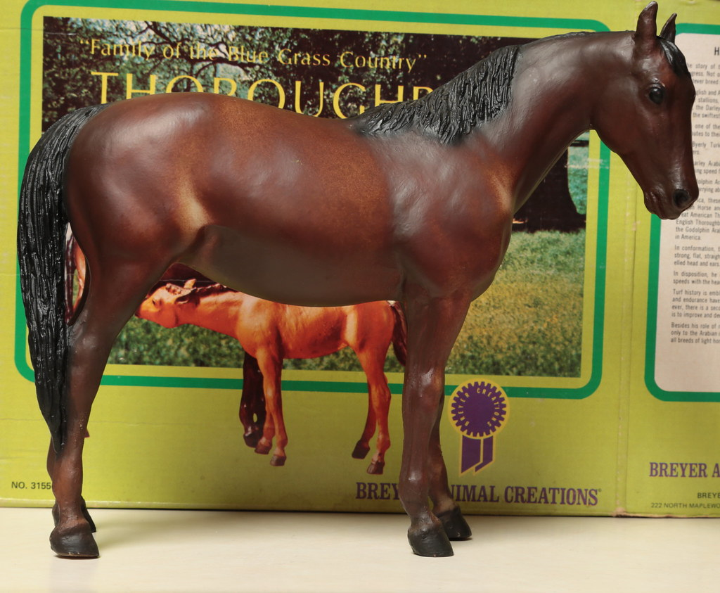 5M2A3047c Thoroughbred Mare Right