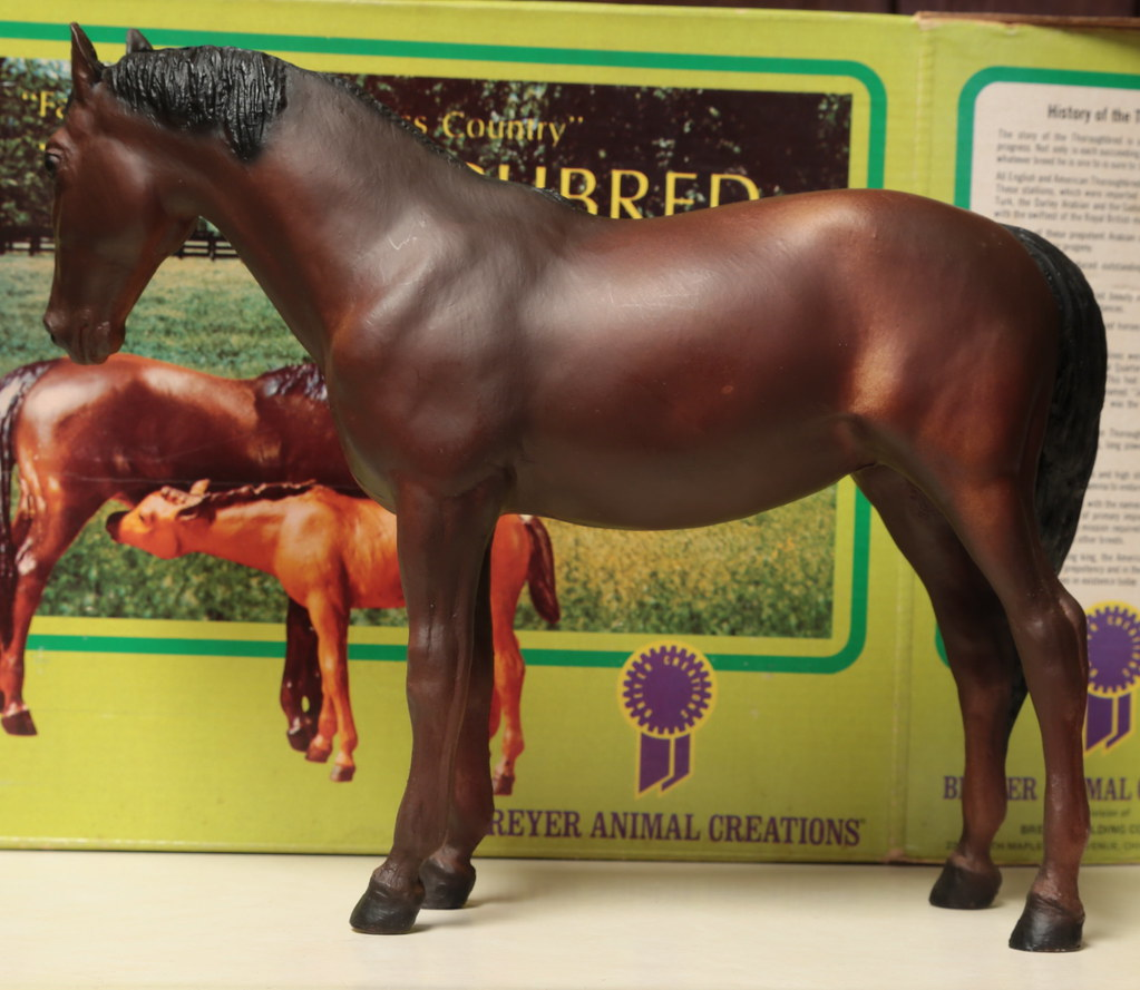 5M2A3048c Thoroughbred Mare Left