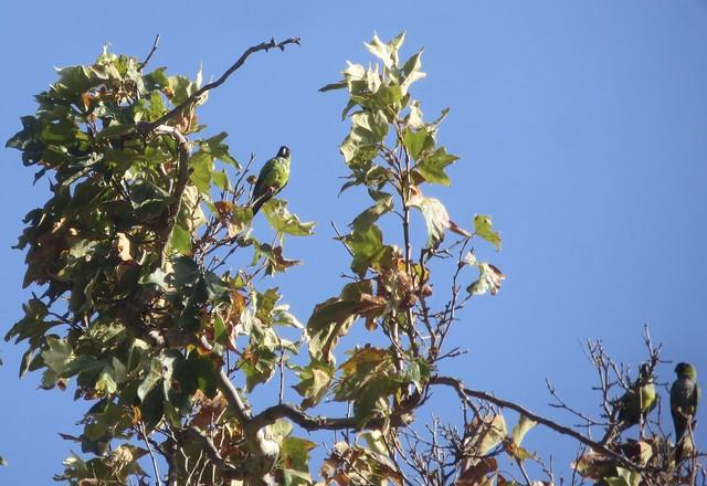 wild parrots take a break