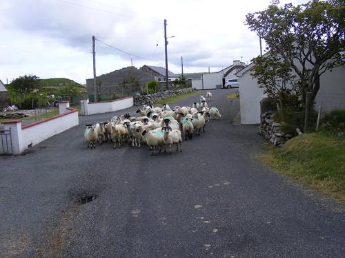 Donegal traffic jam