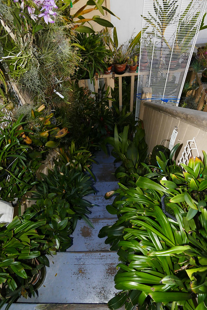 back stairs orchid growing area 6-20