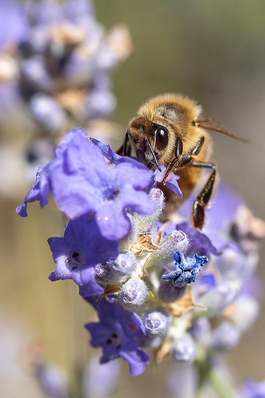 Bee Fabulous!