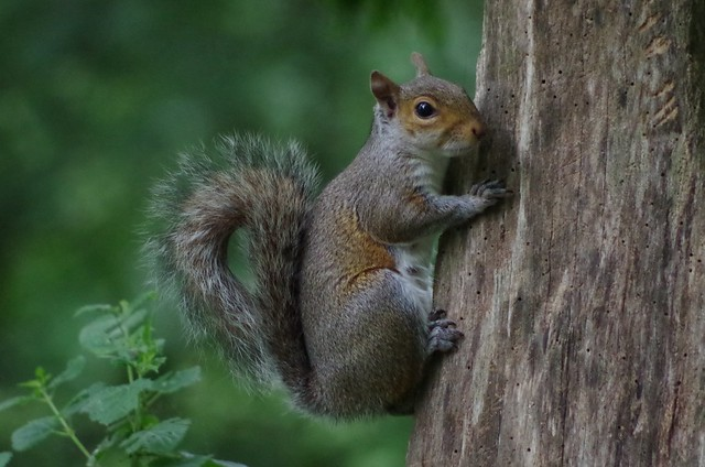 at Lackford Lakes - Suffolk Wildlife Trust