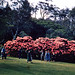 Rhododendrons in Memorial Park, Blackheath