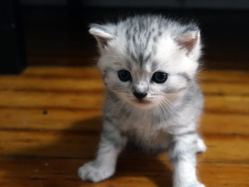 Mochi's kitten
