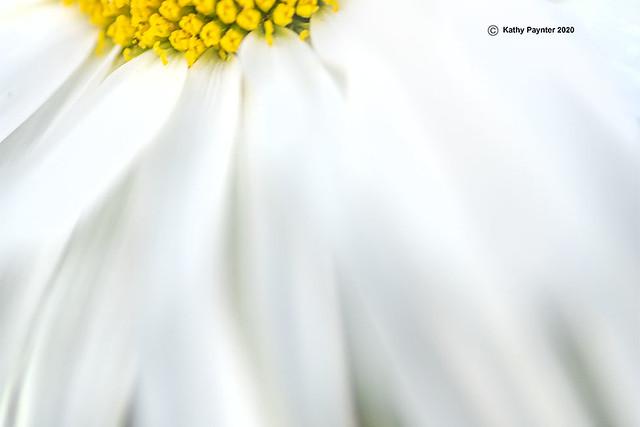 Daisy 1821