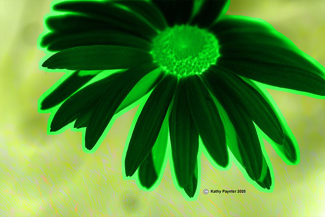 Daisy Outline in Green 1785