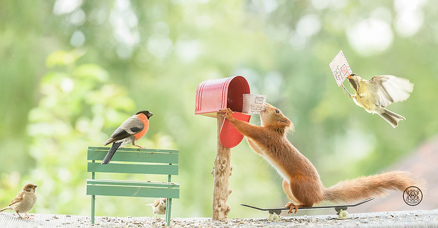 red squirrel is standing on skates holding an enveloppe