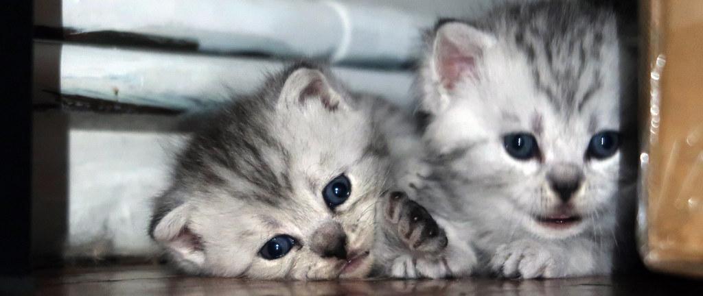 Mochi's kittens
