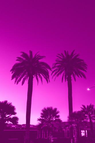 pink vegas sunset tree lasvegas palmtree hotpink edit splittone