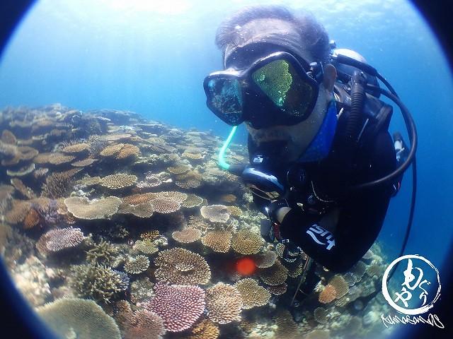 ゴジさんの目にもマスクにも映るのは珊瑚。。。