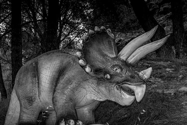 Tricératops dans la pinède