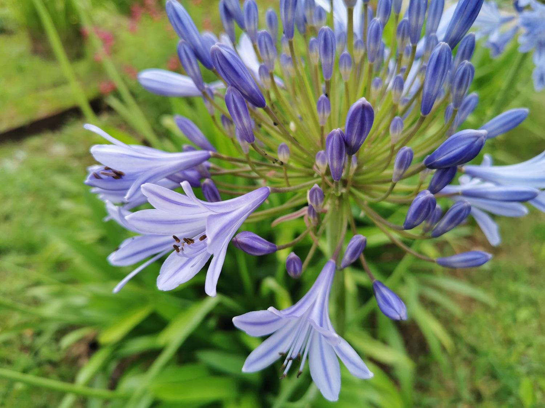 fleurs de ville, fleurs des champs - mai juin 2020