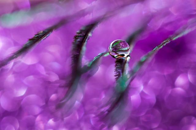 Nevena Uzurov - Purple
