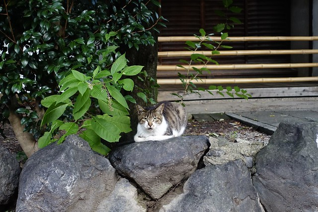 Today's Cat@2020ー07ー22