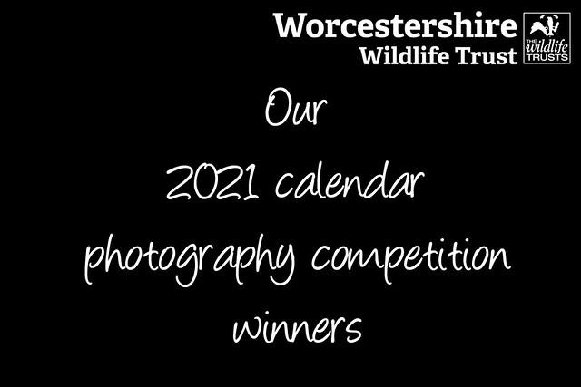 2021 Calendar: winners