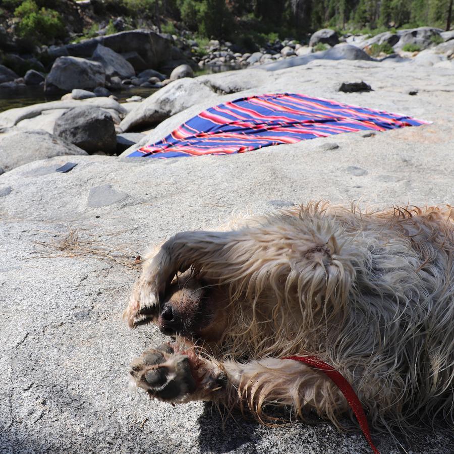 Cody-resting-Dinky-Creek-2020