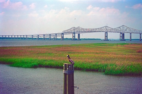 river fleuve waterway landscape paysage bridge pont steel metal pelican bird oiseau vicksburg mississippi usa fotoclub iso200 film amount minoltaamount minolta maxxum spxiquartzdate filmfilmforever