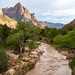 View of The Watchman rock formation along the Virgin River in Utah's Zion National Park at the Golden Hour by m01229