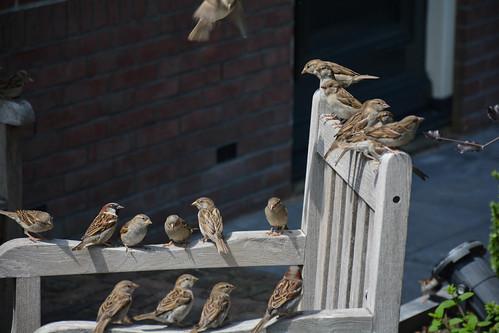 Sparrow Meeting