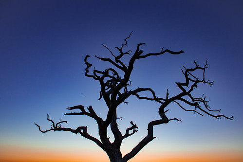 Tree at dusk | by M.T.A.V