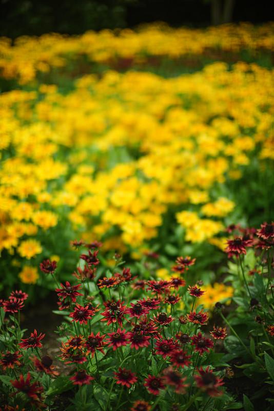 Garden Colors