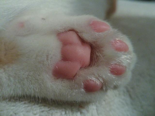 my toe beans