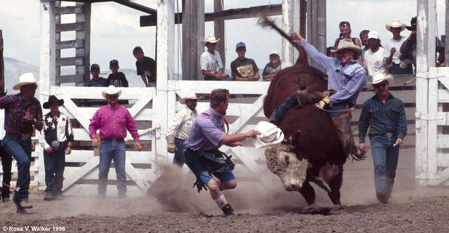 Rodeo Terror