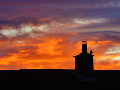 sunrise pigeon chimney cambridge july 2020