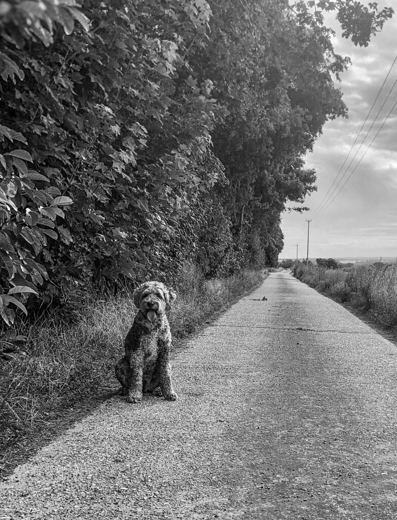 Morning dog walk