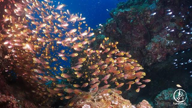 黒島ブルーの中、おさかないっぱい見てきました♪