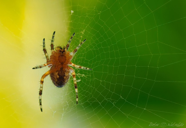 Little spider learns to weave ;-)