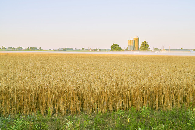 027084a-Sunrise On The Wheat Field