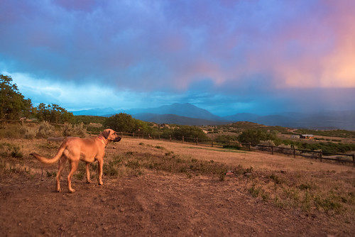 carbondale colorado rockymountains animals cindyhigby clouds dog pets pinklight rain sunset weather usa